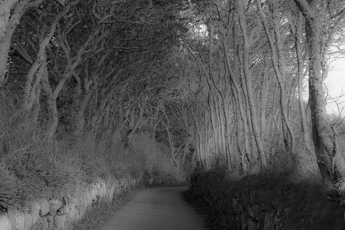 One of the many narrow tree lined lanes on the Isles of Scilly