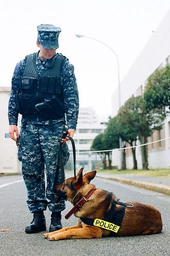 横須賀フェスタ_01