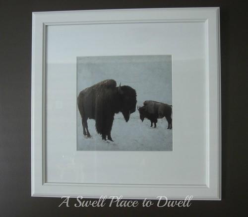 1 Buffalo Lucy Snowe ASPTD