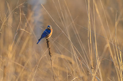 Mr Bluebird House Furnishing-2518.jpg by Mully410 * Images
