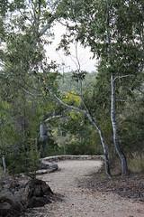 Auburn River NP18
