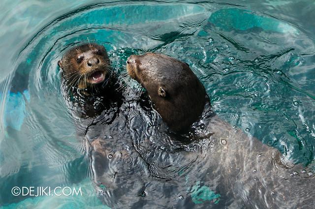River Safari - Giant River Otters