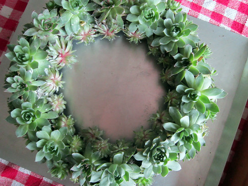her Succulent Wreath