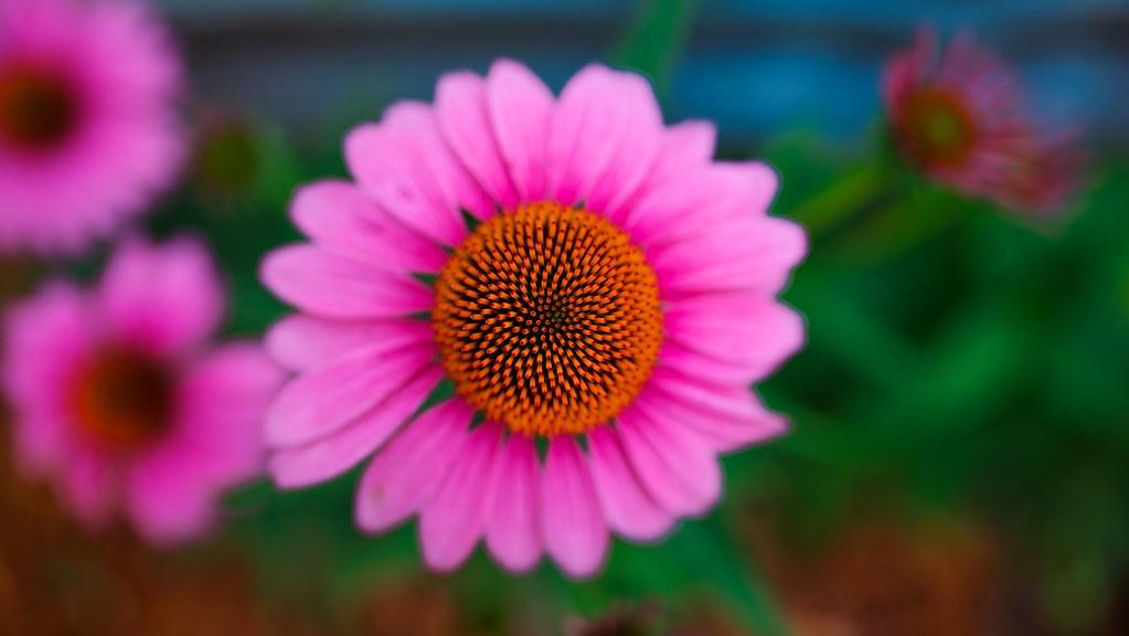 IMAGE: http://farm6.staticflickr.com/5467/9193938331_030f74469d_b.jpg
