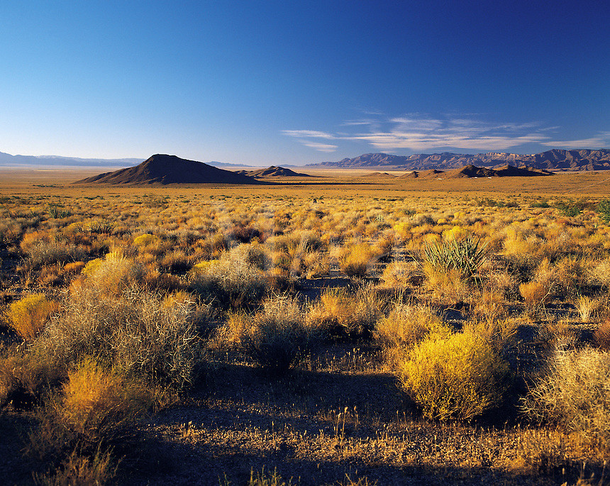 Mohave Desert near Barstow in low evening light; California, USA