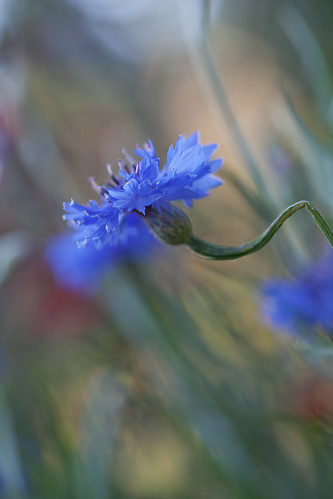 Blue Bokeh~ by conniee4 aka Connie Etter