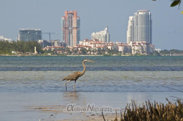 heron 0000 Key Biscayne, Miami, Florida, USA