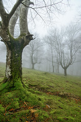 Parque natural de Peñas de Aia