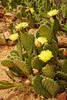 Day 11: Zion Canyon / Flowering cactus