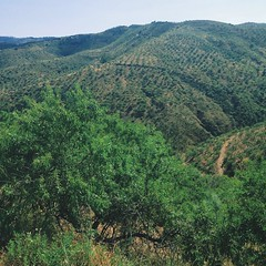 plateau(0.0), temperate coniferous forest(0.0), plantation(0.0), shrub(1.0), mountain(1.0), valley(1.0), tree(1.0), shrubland(1.0), plant(1.0), hill(1.0), hill station(1.0), green(1.0), ridge(1.0), forest(1.0), natural environment(1.0), jungle(1.0), biome(1.0), vegetation(1.0), rural area(1.0), mountainous landforms(1.0),