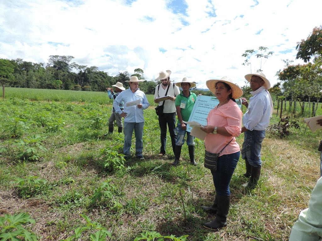 Grupo de ganaderos preguntando sobre los beneficios de los sistemas silvopastoriles intensivos