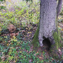Fairy Hole