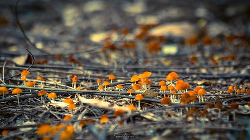 2016 bangladesh sreemongal sremanga sylhit tmp tmphotography tarek tarekmahmud mhd travel trk trkmhd mushrooms nature