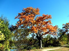 Mill Pond Park -- Autumn (13)