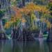 Ca c'est bon by D Breezy - davidthompsonphotography.com