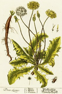 an illustration of a green dandelion plant