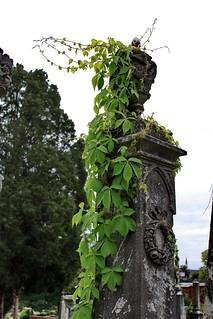 rose hill cemetery bibb county georgia