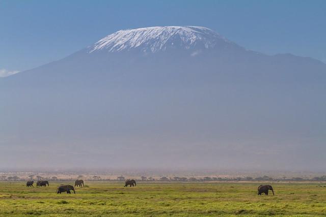 Elefantes africanos en el Parque Nacional de Amboseli, Kenia, con el monte Kilimandjaro al fondo