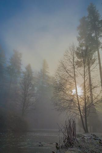 mist fog centralpark upperpond