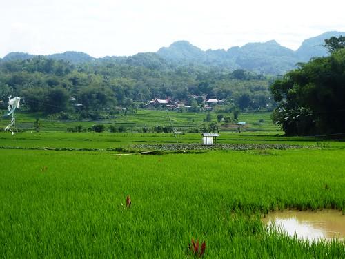 Sulawesi13-Makale-Rantepoao (44)