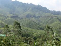 Tee überzogene Berge - CH