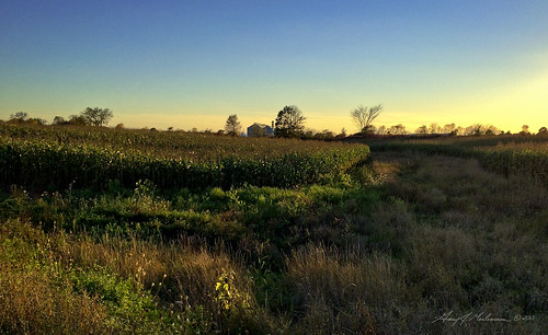 autumn sunset sun fall nature set wisconsin lights corn weeds weed country iphone iphonecamera iphoneography