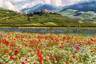 Castelluccio di Norcia, prati fioriti