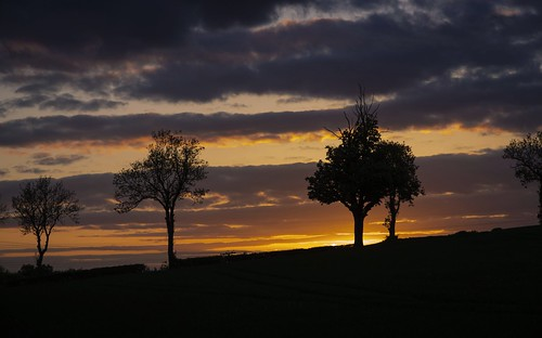 uk trees sunset england sky sun tree evening countryside leicestershire britain outdoor dusk great t4i canon650d