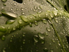 Drops/水珠-P1580899 by aleq1463