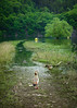 Der Pfad der Nilgänse