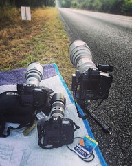 Covering the MS-150 Bike to the River - Canon 600mm f/4 on the ground pod, 300mm f/2.8 II, and the   reliable 200mm f/2.8 II. All are powered by Canon 1Dx bodies. Over 8000 images going on line totaling over 40,000 with contributions from the rest of my c