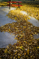 Red picnic table in river of leaves