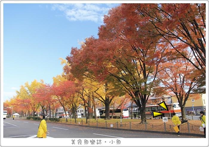 【日本旅遊】京都 東本願寺/銀杏大道