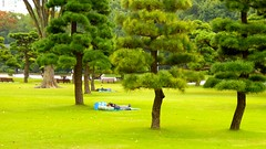 Homeless in the Imperial Garden in Tokyo