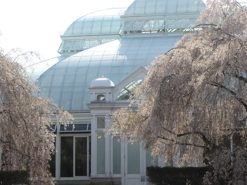 conservatory and cherry trees, closeup