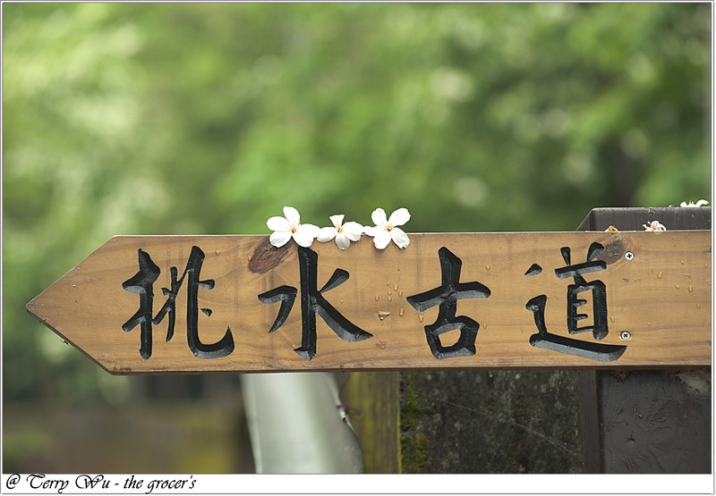 2012-04-19 挑水古道桐花-10
