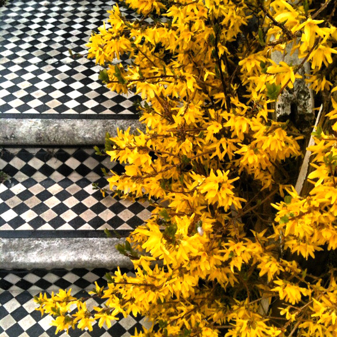 Yellow_flowers_tiles