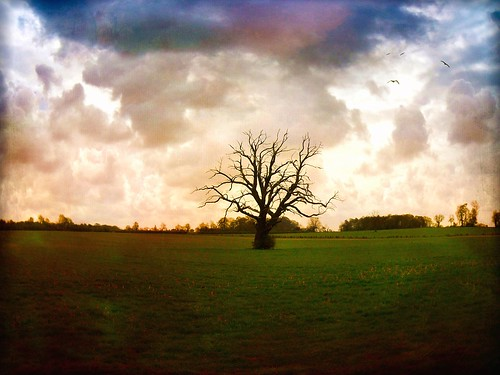 sky tree texture field birds clouds dead branches northants oundle mygearandme