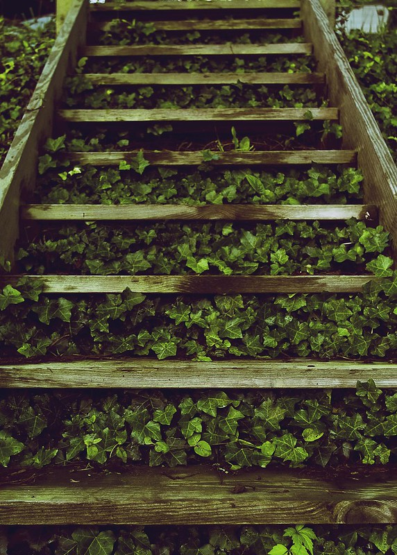 Ivy and Stairs