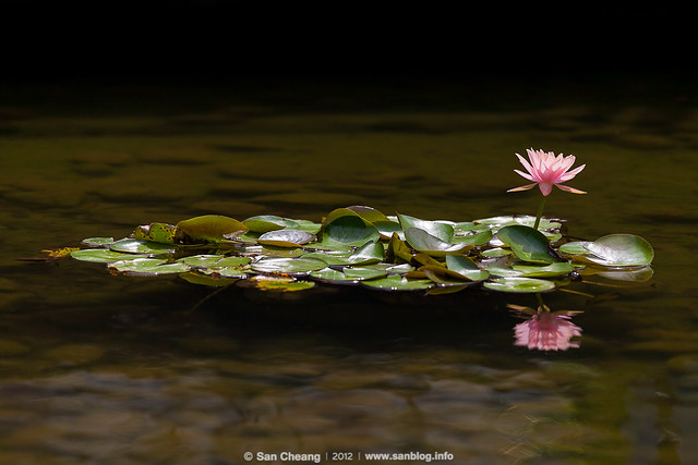 flower_MayLotus-0257