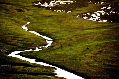 china sunset nature grass animal river dusk plateau mel land melinda yellowriver grassland yaks 青海 qinghai 青藏高原 chanmelmel 達日