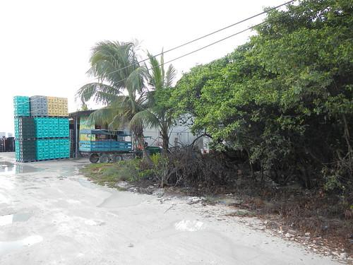 Bottle warehouse at edge of mangrove swamp