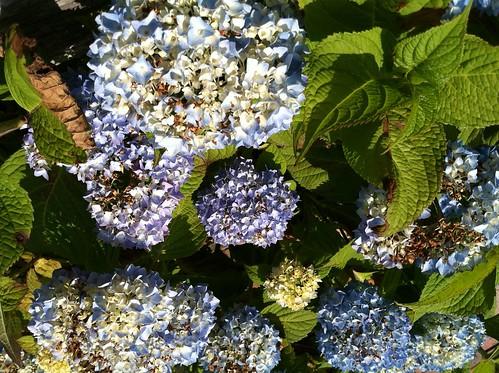 Nantucket flower 3