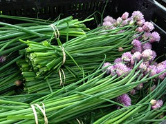 Got lovely chives with purple flowers at the Cortelyou Greenmarket today. Gorgeous!