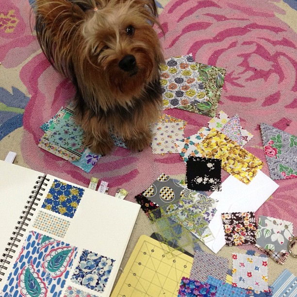 Percy has been helping me make a swatch book.