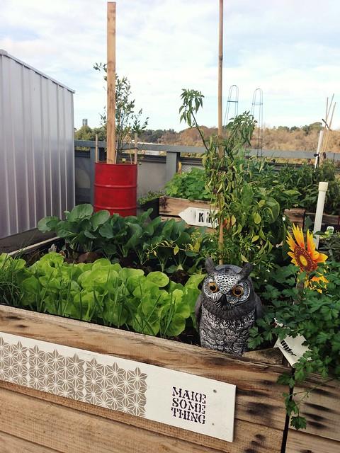 little veggie patch co