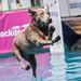 GoPro Mountain Games- Dog Jump by elpresidente408
