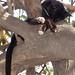 Gato durmiendo en un árbol - cat sleeping in a tree; San Mateo del Mar, Región Istmo, Oaxaca, Mexico por Lon&Queta