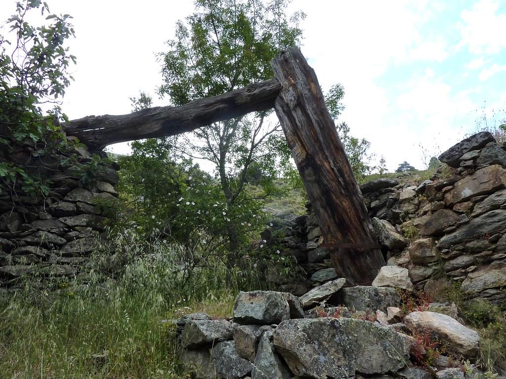 Le tronc de lariciu évidé pour l'amenée d'eau au moulin