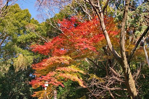 【写真】紅葉 : 石清水八幡宮